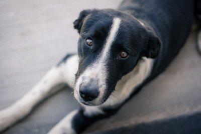 Вампири и извънземни в новата кампания на Pedigree за осиновяване на кучета