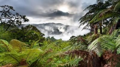 Нова Зеландия призовава хората да превърнат разочарованията си от 2020 в дърво