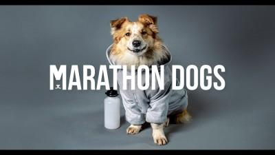 Кучета-маратонци
